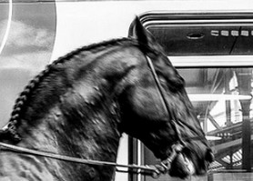 cheval-gare-saint-header
