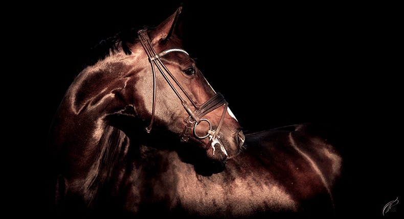 www.pegasebuzz.com | Equestrian photography : Louise TP Photography