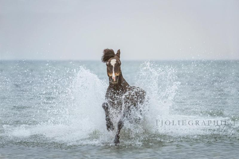 www.pegasebuzz.com | Equestrian photography : Gina Montana Wetzler - Joliegraphie