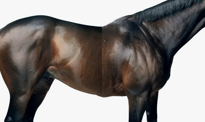 www.pegasebuzz.com | Equestrian photography : Peter Hapak - Horse Blame for ESPN.