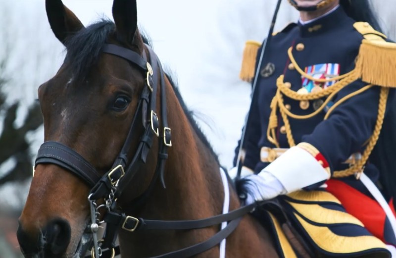 www.pegasebuzz.com   Le président Emmanuel Macron offre un cheval de la Garde Républicaine à la Chine : Vésuve de Brekka.