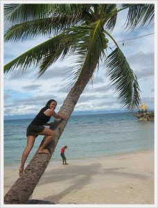 coconut tree mangodlong