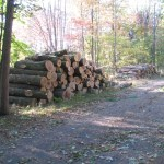 Following the storm, a local lumber company removed 66,640 board feet of logs from Peninsula. Photo: Chuck Smrz.