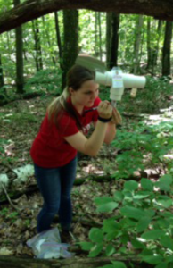 Graduate Student Stephanie Jagemann at work recording weekly data from a beetle trap in Peninsula