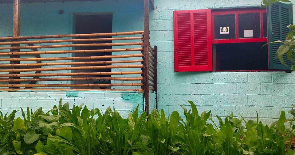 Conheça a Uni Horta: agricultura urbana como modelo de economia solidária