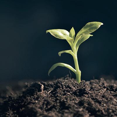 Jornada: Procedència, evolució i perspectives de futur dels consums associats a les substàncies psicoactives d'origen botànic