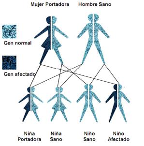 Transmisión genética info