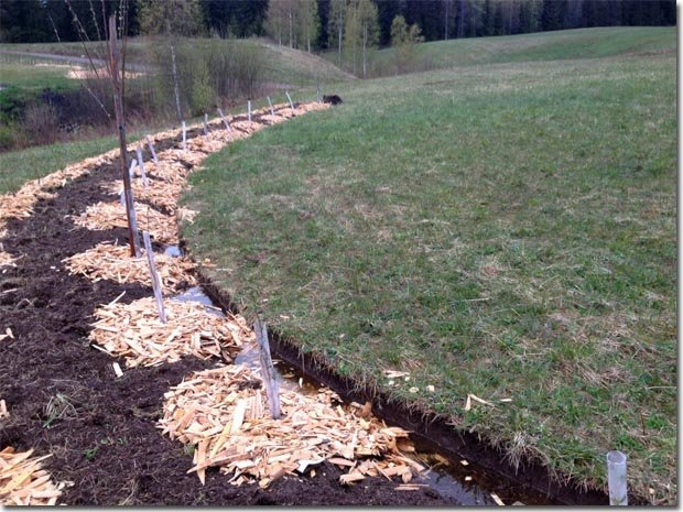Setting-Permaculture-Farm-21
