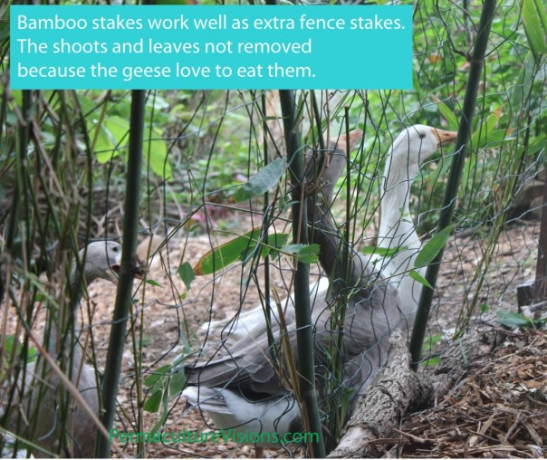 geese bamboo fence posts