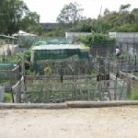 Permaculture & Community Gardens