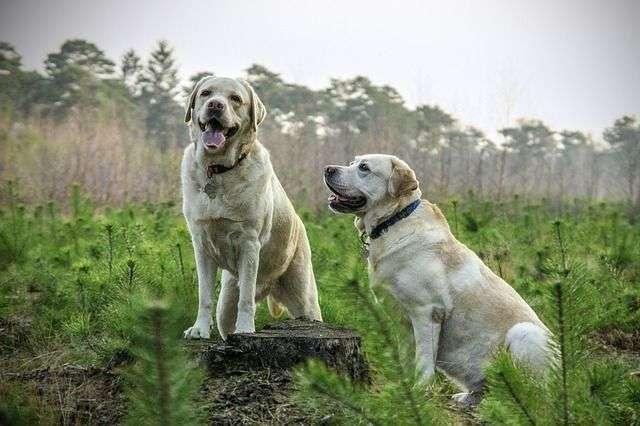 Vendajes en los Perros