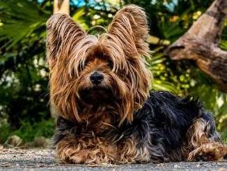 Cosas que Debes Pensar Antes de Tener un Perro