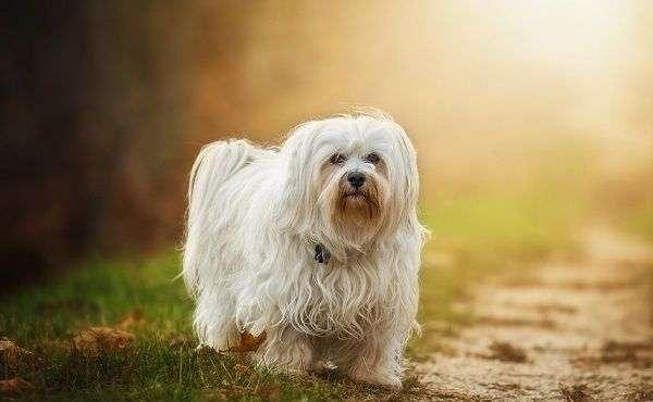 Ocho Consejos para Cuidar a tu Perro