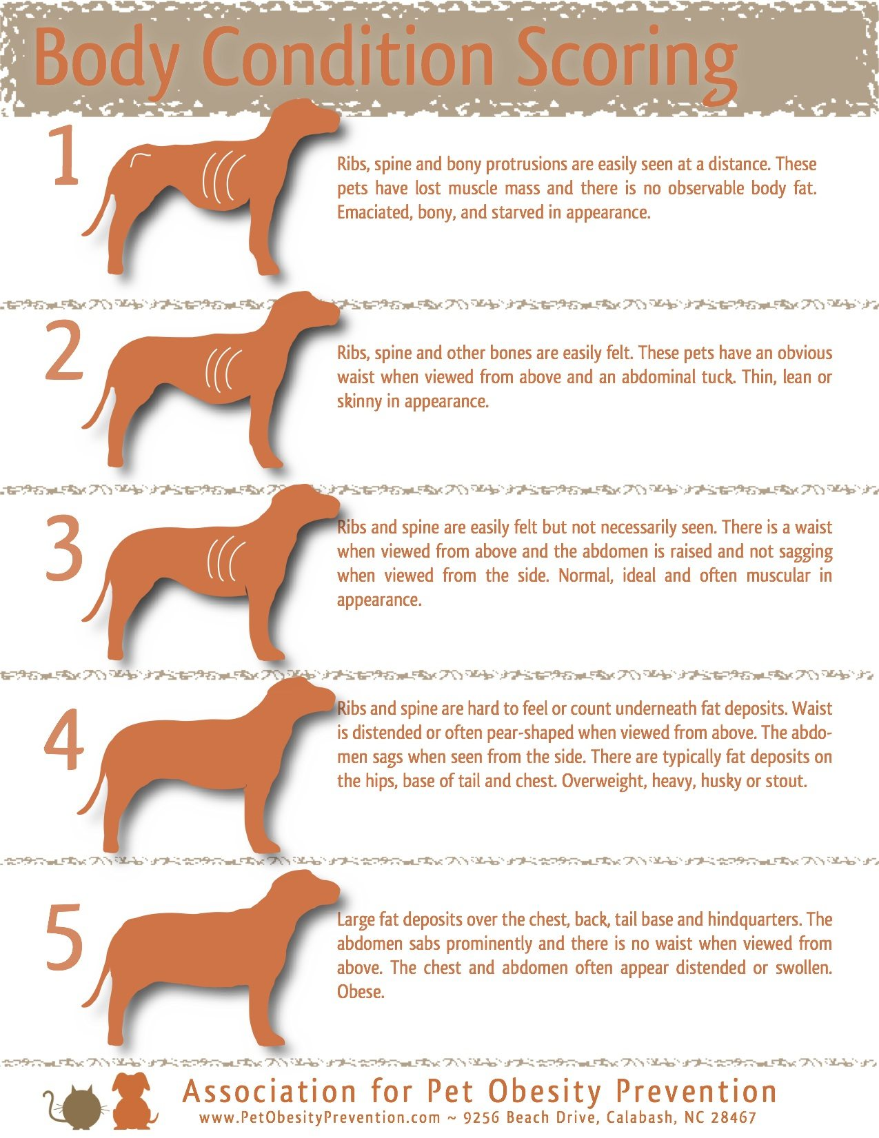 Relieving Food Allergies This Is A Fairly Common Illustration Dog Weight Appearance Andfeel Are Always So Your Dog Is Fat What Persephone Magazine How To Put Weight On A Dog After Parvo How To Put Wei bark post How To Put Weight On A Dog