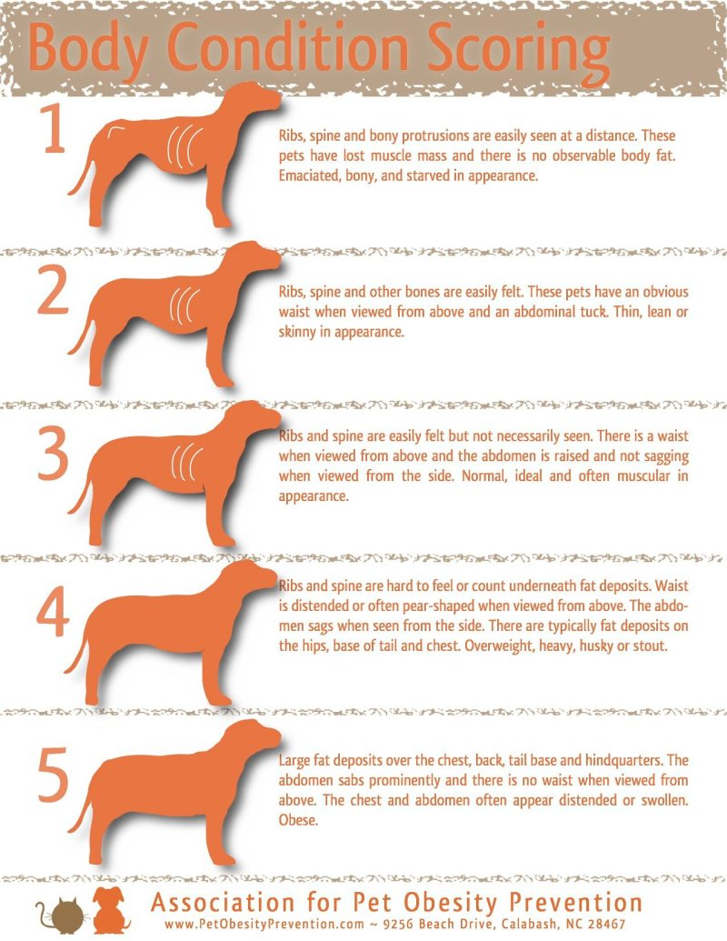 Large Of How To Put Weight On A Dog