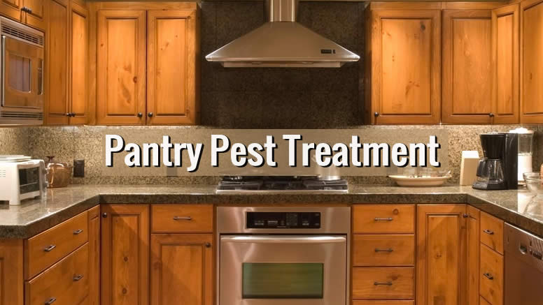 how to get rid of pantry bugs