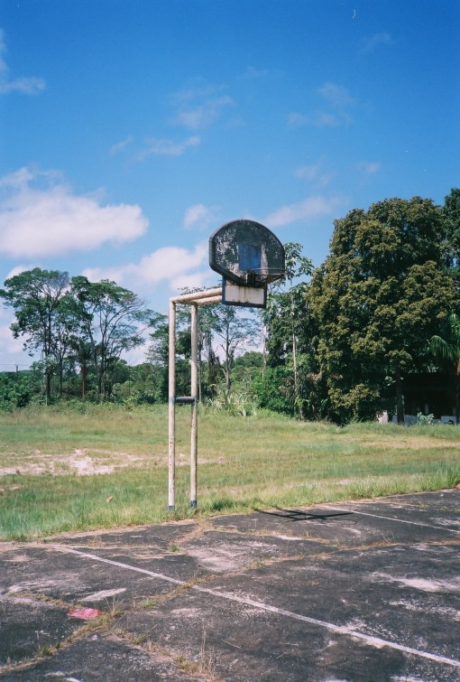 Jungle Courts