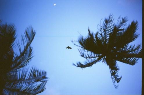 SKY_BIRD_PALM