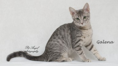 cats for adoption via Felines and Friends New Mexico