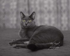 Pet sitting and pet photography in Santa Fe NM