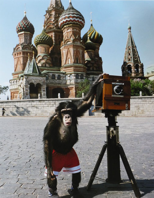 Chimpanzees Photographs Set to Fetch Over $100,000 At Auction monkeyteach0