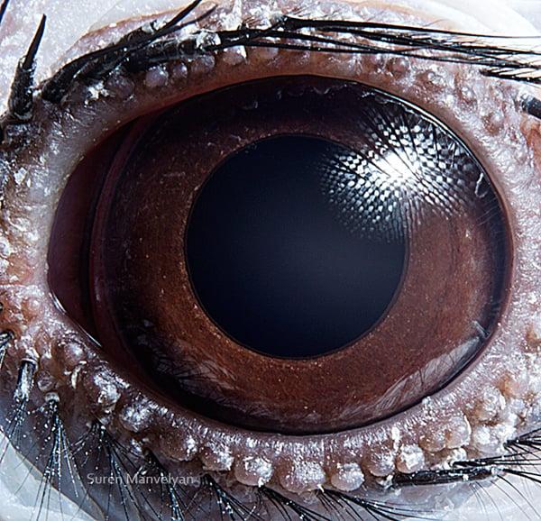 Stunning Macro Photographs of Animal Eyes macroeye11
