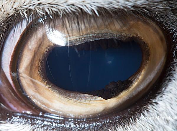 Stunning Macro Photographs of Animal Eyes macroeye14
