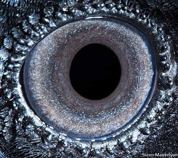 Stunning Macro Photographs of Animal Eyes macroeye8
