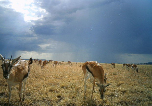 Camera Trap Images Offer a One of a Kind Look at Life on the Serengeti serengeti3