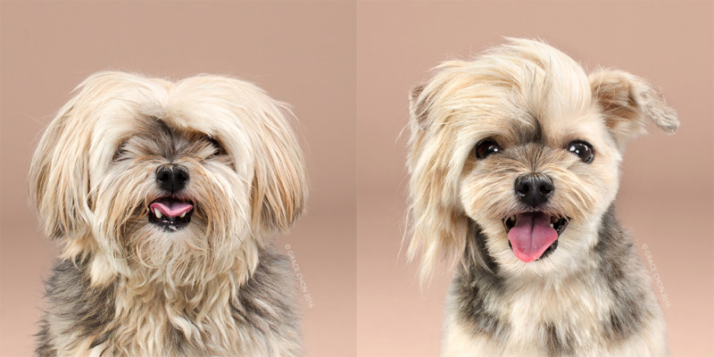 Rocco, groomed by Patricia Sugihara
