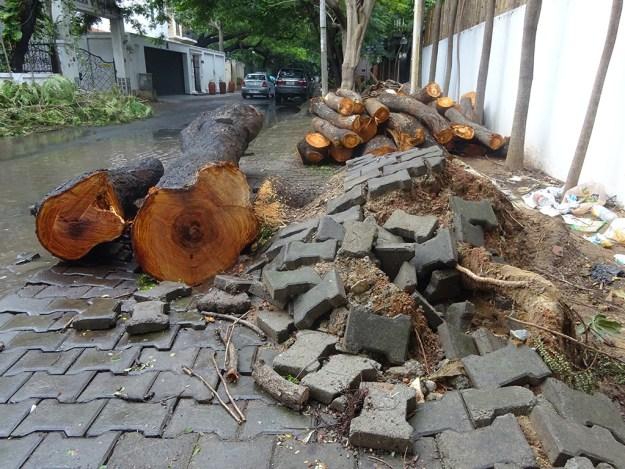 Chennai Cleanup