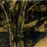 sawdust tree