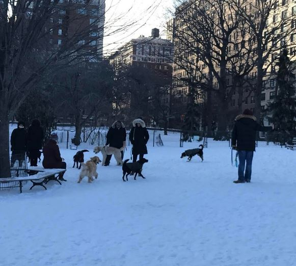 72nd Street Dog Run
