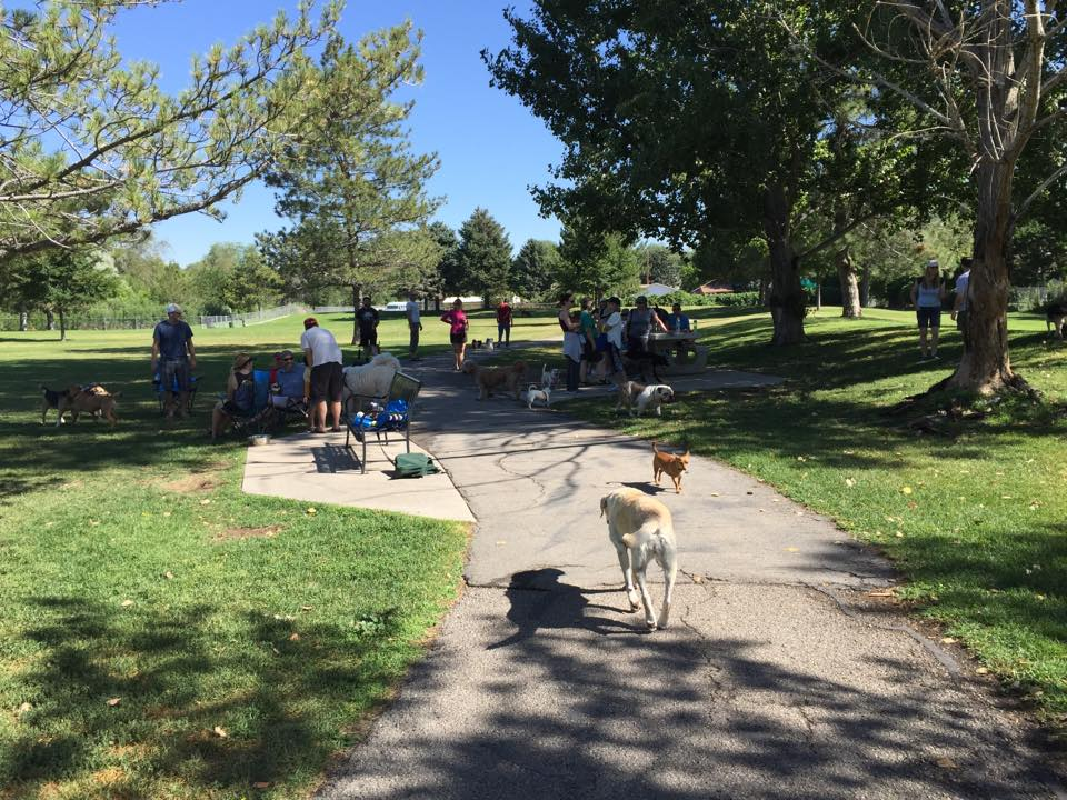 Cottonwood Dog Park