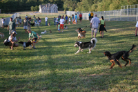 Cranberry Township  Rotary Dog Park