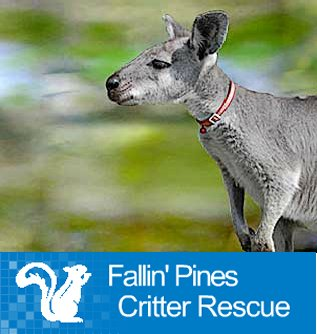 Fallin' Pines Critter Rescue, Inc.