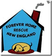 Forever Home Rescue New England