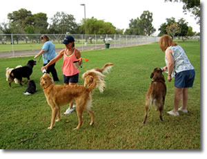 Paradise Valley Park Dog Park