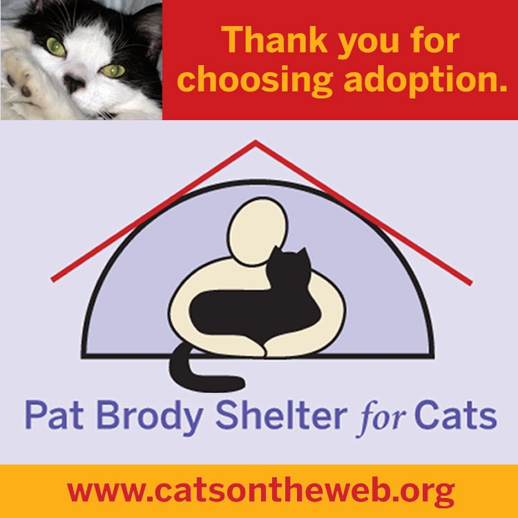 Pat Brody Shelter for Cats