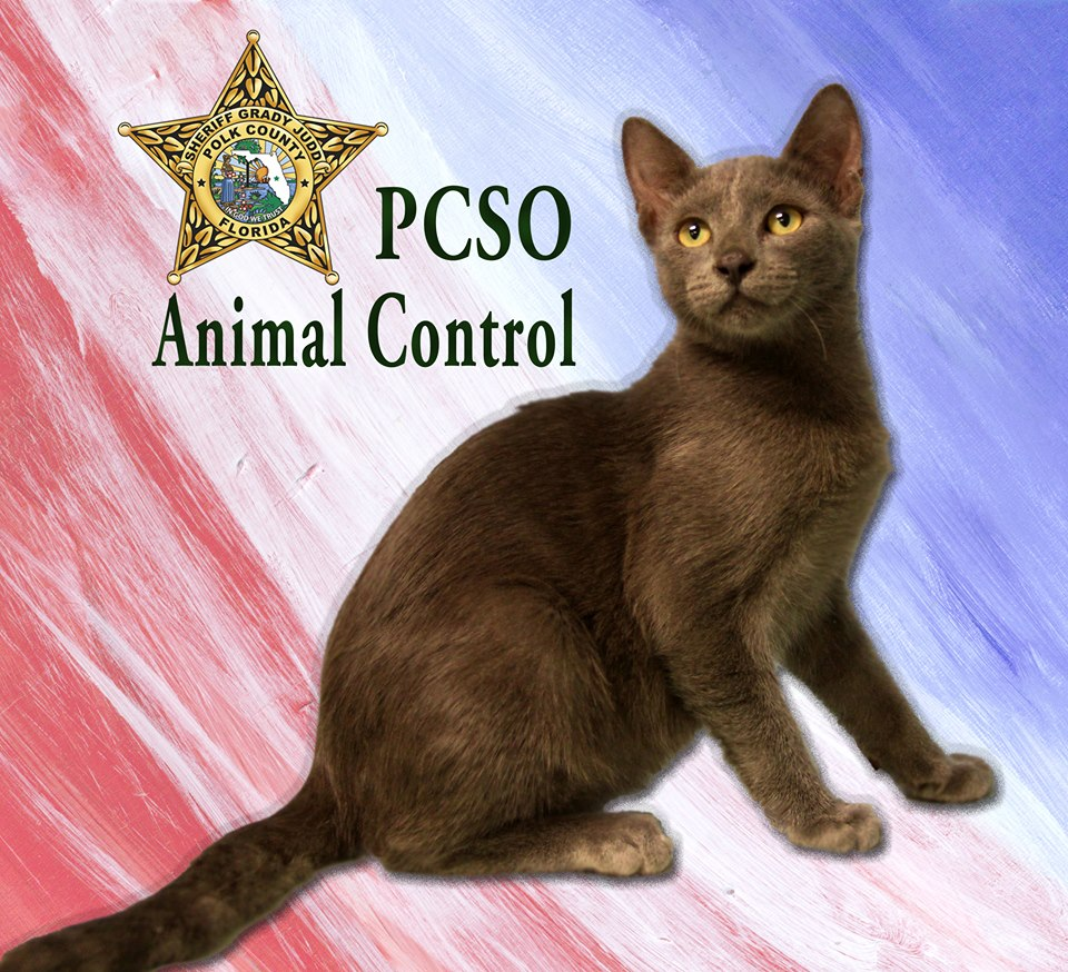 Polk County Animal Control -Florida