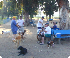 Recreation Park Dog Park