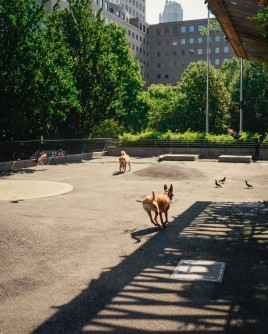 Sirius Dog Run at Kowsky Plaza