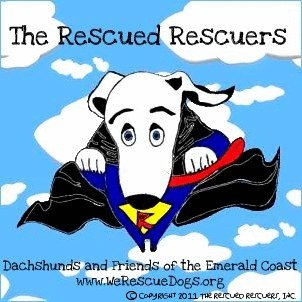 The Rescued Rescuers: Dachshunds and Friends of the Emerald Coast