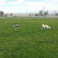 West Jordan Off-Leash Dog Park