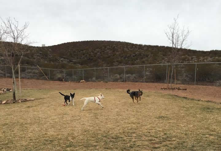 Hurricane City Dog Park