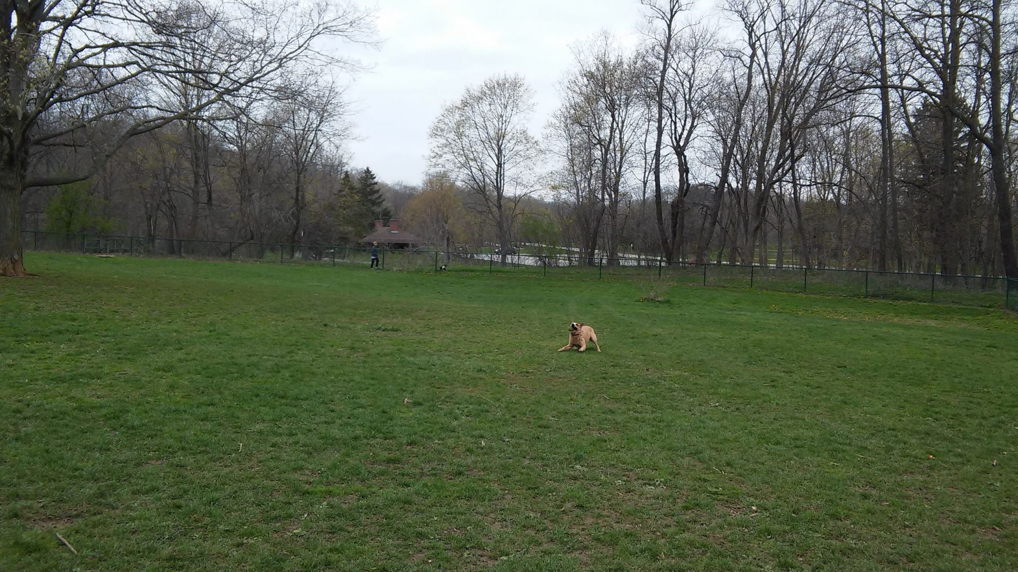 Carlisle Family Dog Park at Petrifying Springs Park