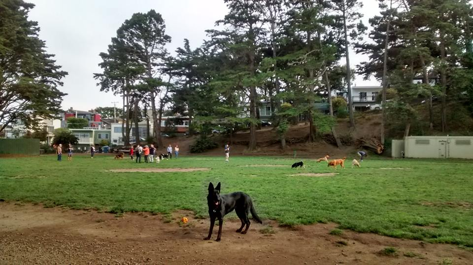 Upper Douglass Dog Play Area
