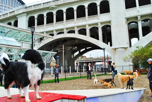 Downtown Cleveland Dog Park
