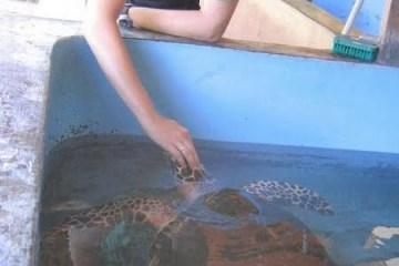La pouponnière à tortues du centre de plongée Reef Seen, à Pemuteran. Bali, Indonésie, juillet 2008.