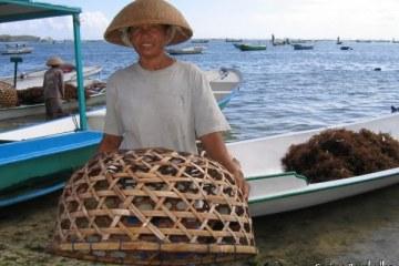 Cultivatrice d'algues à Nusa Lembongan.